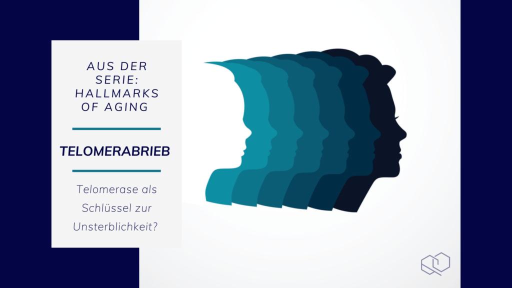 Telomerabrieb - Hallmarks of Aging