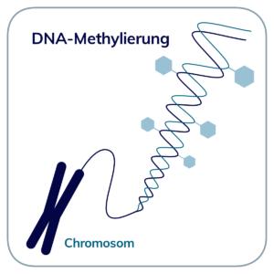 DNA-Methylierung
