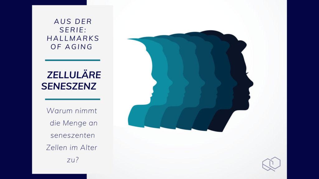Zelluläre Seneszenz, Hallmarks of Aging, MoleQlar