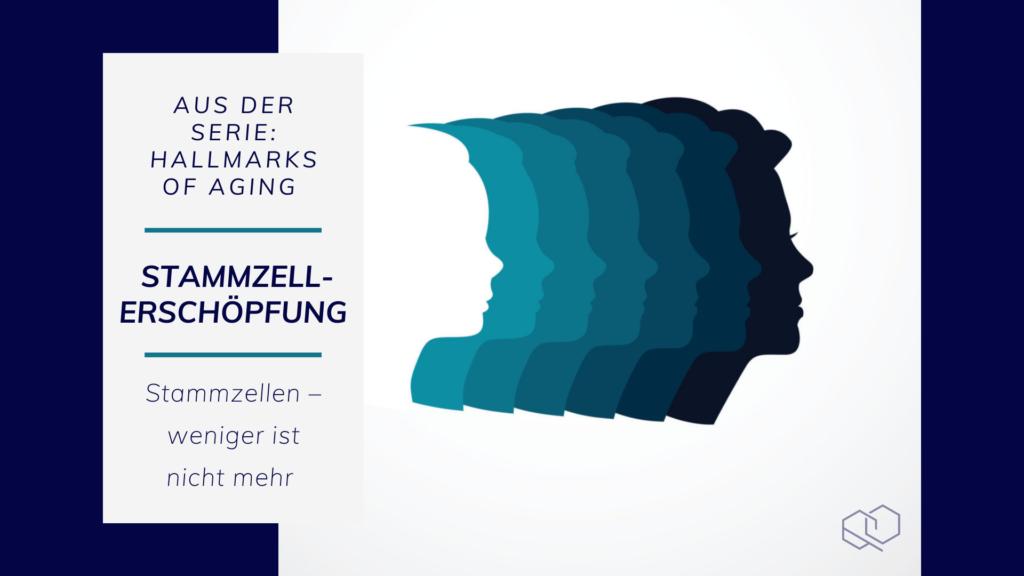 Stammzellerschöpfung, Hallmarks of Aging