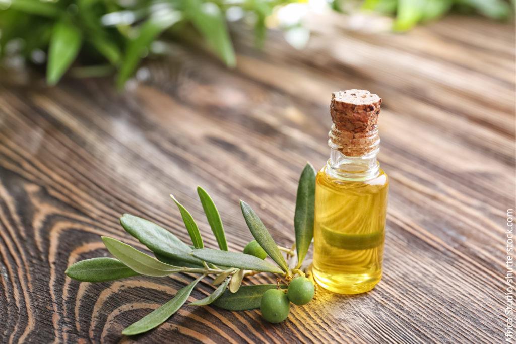 Oliven, Olivenblätter und Olivenblattextrakt